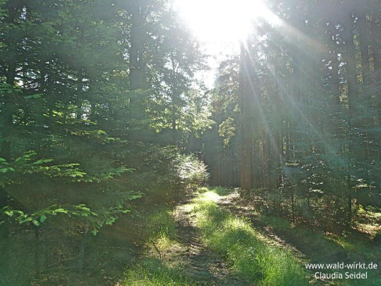 Impressionen vom Waldbaden (2)