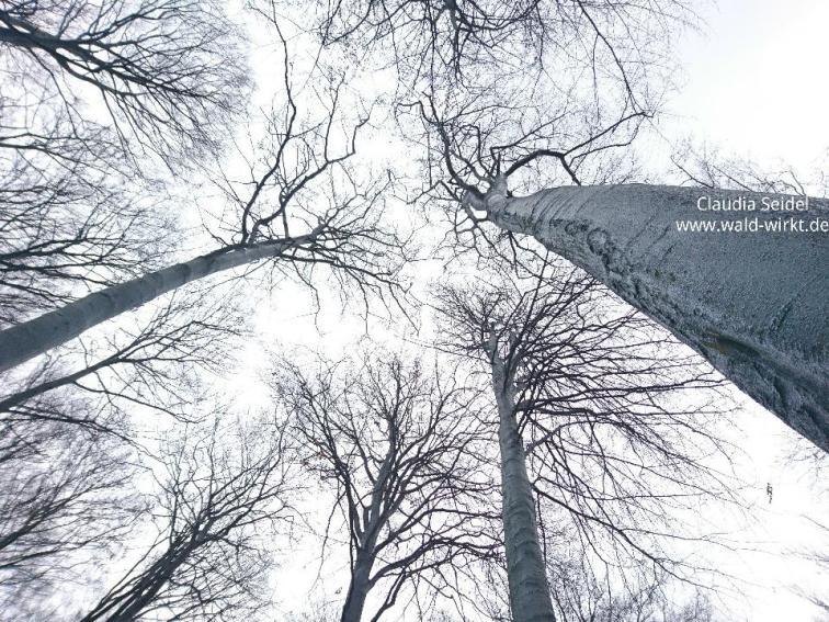 Wald wirkt! Blick in die Gipfel_1
