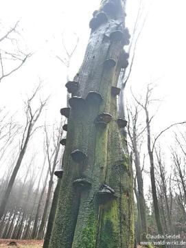 Wald wirkt! Skurile Skulptur_Kunst im Wald_1
