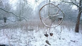 Wald wirkt!_Winterimpressionen am Möhnesee