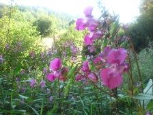 Waldbaden im Arnsberger Wald_www.wald-wirkt.de (3)